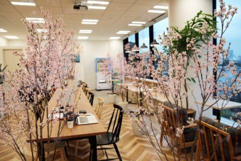 and factoryで桜が見ごろ!混雑・花粉・寒さを解消する【#インドア花見】をオフィスにも。